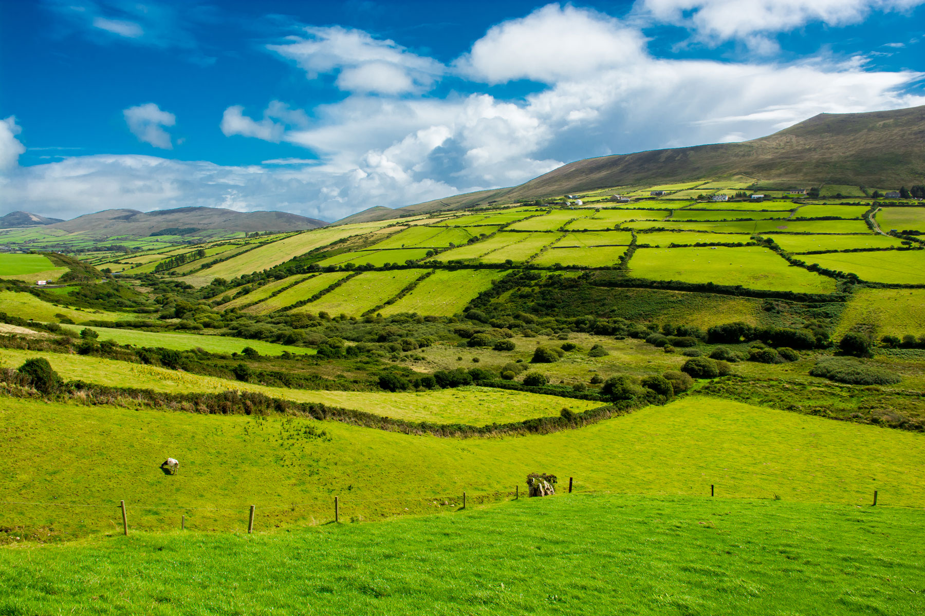 beautiful Irish midlands landscape